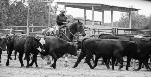 horseshow (30 of 107)