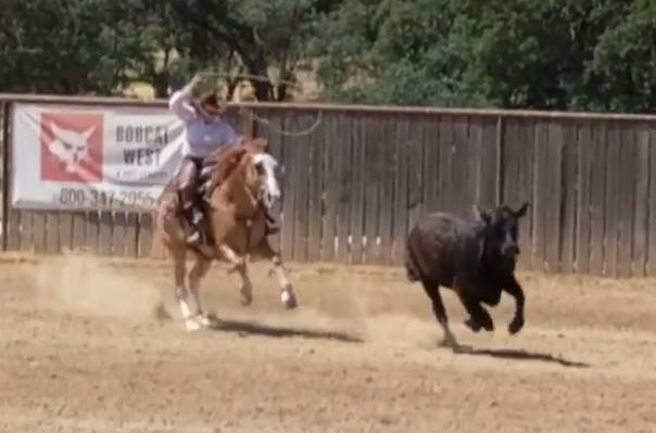 Ropin on Bentley